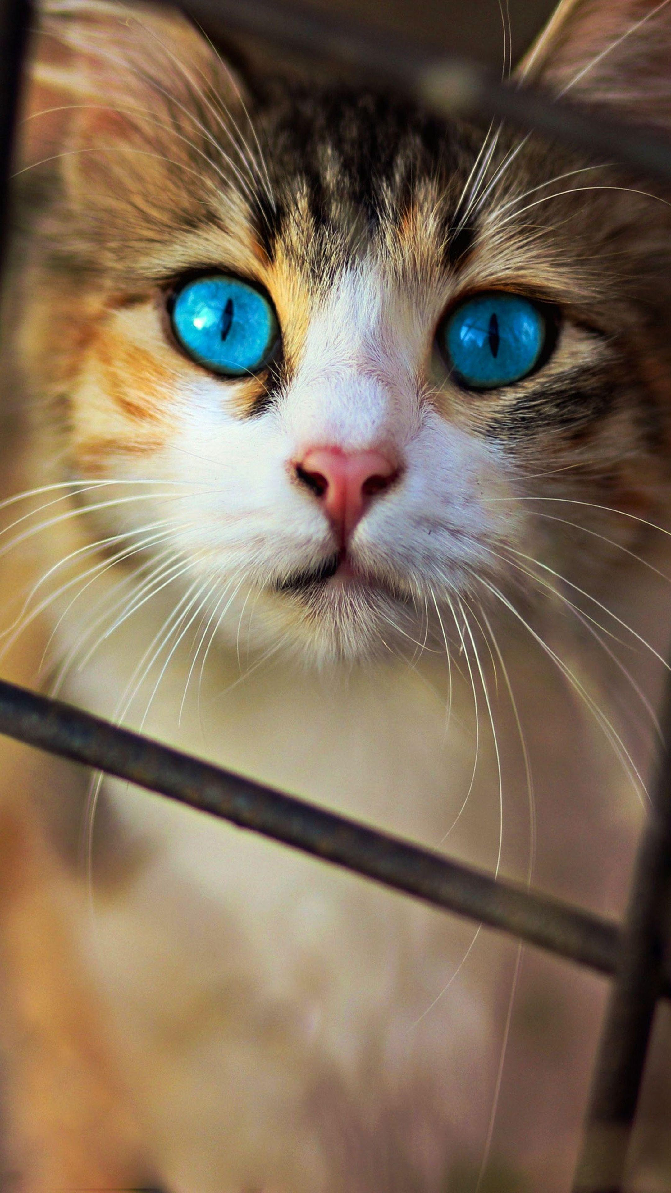 Cute Cat For Mobile Wallpapers And Hd Backgrounds Free Download On Picgaga